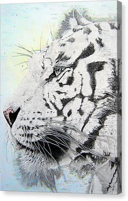 Bokeh Bengal Canvas Print