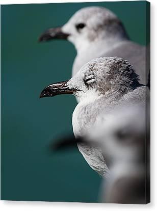 Water Bird Canvas Print - Bokehliceous Gulls Florida Keys by Mr Bennett Kent