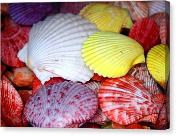 Seascapes Canvas Print - Bold Color Shells by Julia Fine Art And Photography