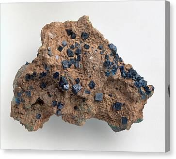 Boleite Crystals In Gypsum Groundmass Canvas Print