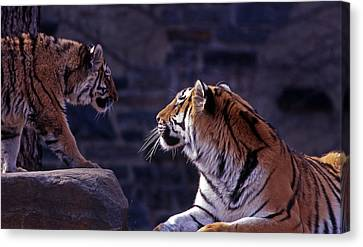 Bonding Canvas Print by Skip Willits