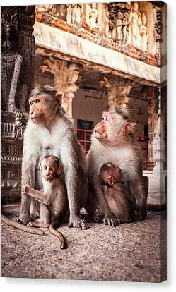 Four Animal Faces Canvas Print - Bonnet Macaques And Young by Paul Williams