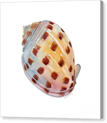 Seashell Canvas Print - Bonnet Shell by Amy Kirkpatrick