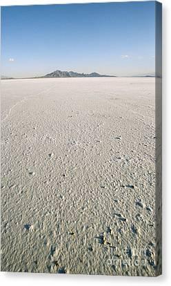 Bonneville Salt Flats Canvas Print by Mark Newman