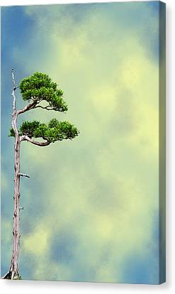 Bonsai Glow Canvas Print by John Haldane