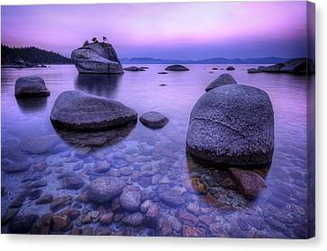 Bonsai Rock Canvas Print by Sean Foster