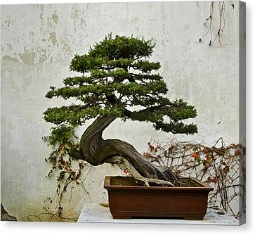 Canvas Print featuring the photograph Bonsai Suzhou China by Sally Ross