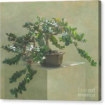 Bonsai Tree Canvas Print by Arlene Carmel