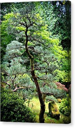 Bonsai Tree Canvas Print by Athena Mckinzie