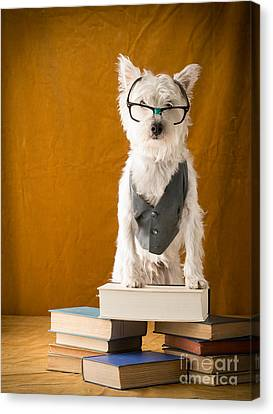 Library Canvas Print - Bookish Dog by Edward Fielding