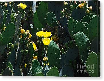 Southwest Canvas Print - Boquete Of Needles  by GD Rankin