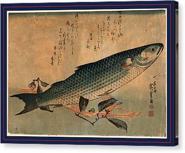 Bora Zu, Striped Mullet Bora. Between 1833 And 1836 Canvas Print by Utagawa Hiroshige Also And? Hiroshige (1797-1858), Japanese