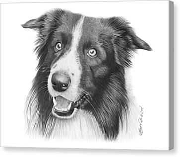 Border Collie -030 Canvas Print by Abbey Noelle