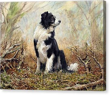 Border Collie Canvas Print by Anthony Forster