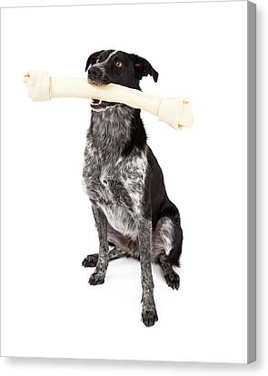 Border Collie Carrying Bone Canvas Print
