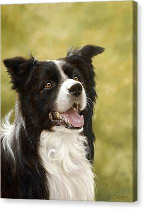 Border Collie Head Study Canvas Print by John Silver