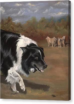 Border Collie Herding Canvas Print