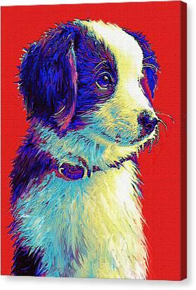 Border Collie Puppy Canvas Print by Jane Schnetlage