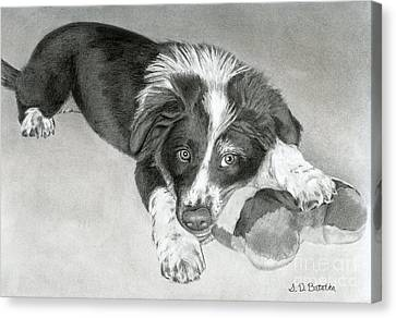Border Collie Puppy Canvas Print by Sarah Batalka