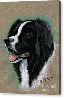Border Collie Canvas Print by Val Stokes