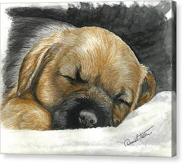 Dog Canvas Print - Border Terrier Puppy Nap by Daniele Trottier