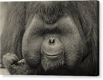 Bornean Orangutan II Canvas Print by Lourry Legarde