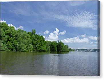 Borneo, Brunei Dense Mangrove Forest Canvas Print by Cindy Miller Hopkins