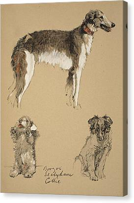 Greyhound Canvas Print - Borzoi, Sealyham And Collie, 1930 by Cecil Charles Windsor Aldin