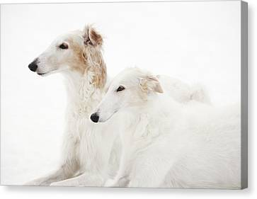 Sight Hound Canvas Print - Borzoi Sight Hounds by Christian Lagereek