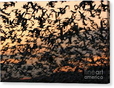 Canvas Print featuring the photograph Bosque Sunrise Blastoff by John F Tsumas