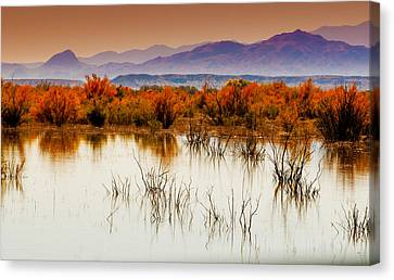 Bosque Canvas Print by Carolyn Dalessandro