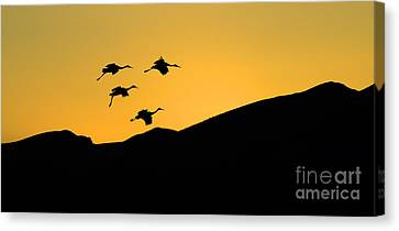 Bosque Del Apache Last Light Canvas Print by Bob Christopher