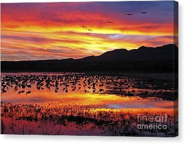 Bosque Sunset II Canvas Print by Steven Ralser