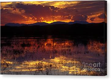 Bosque Sunset - Orange Canvas Print by Steven Ralser