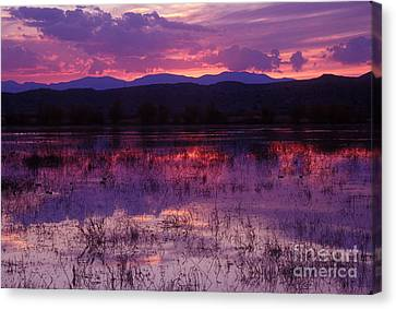 Bosque Sunset - Purple Canvas Print