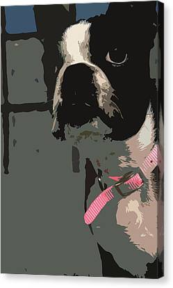 Boston Terrier Art01 Canvas Print