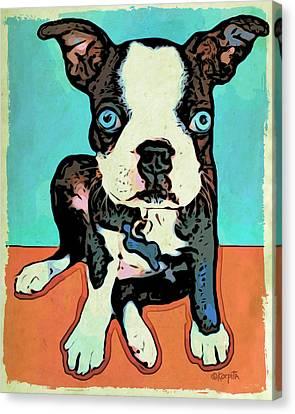 Boston Terrier - Blue Canvas Print