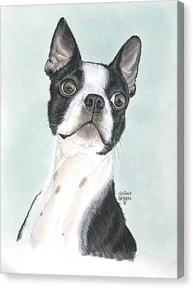 Boston Terrier Canvas Print by Heather Gessell