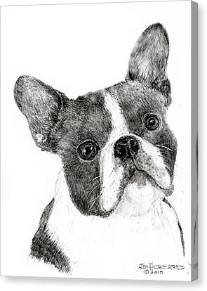 Canvas Print featuring the drawing Boston Terrier by Jim Hubbard