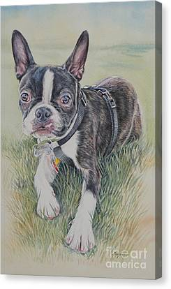 Boston Terrier Puppy Canvas Print by Gail Dolphin