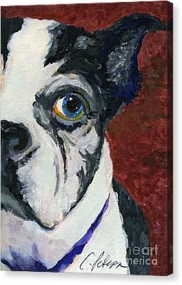 Boston Terrior Dog. Lulu 2010 Aceo Canvas Print