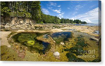 Botanical Beach Canvas Print - Botanical Beach by Matt Tilghman