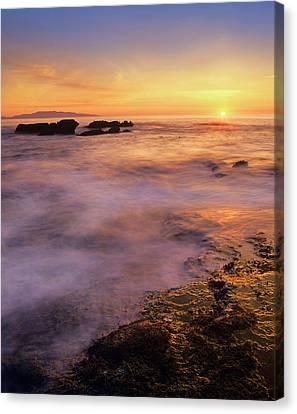 Botanical Beach Canvas Print - Botanical Beach, Vancouver Island by Tim Fitzharris