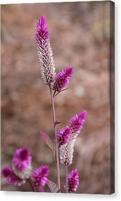 Botanical Bokeh Canvas Print