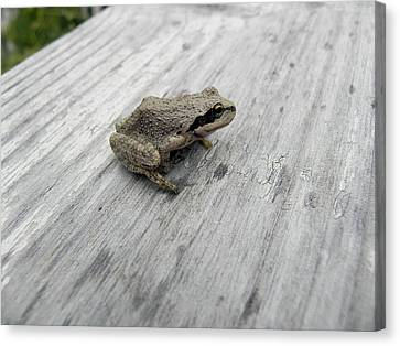 Botanical Gardens Tree Frog Canvas Print