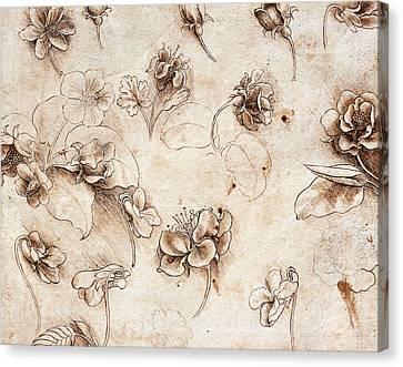 Botanical Table Canvas Print by Leonardo Da Vinci