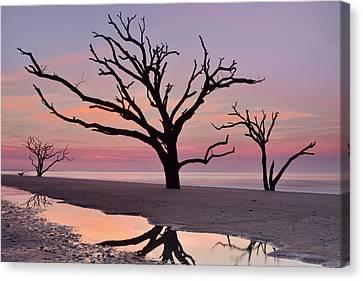 Botany Bay Trees Canvas Print
