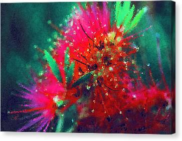 Bottle Brush Flower Canvas Print by Georgiana Romanovna
