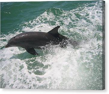 Canvas Print featuring the photograph Bottlenose Dolphin Catching A Wave by Jean Marie Maggi