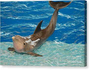 Bottlenose Dolphin Canvas Print by DejaVu Designs